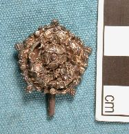 The silver-gilt Tudor clothes fastener recorded at the Liverpool finds roadshow.