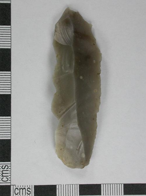 CORN-BCDCE3: blade (dorsal)