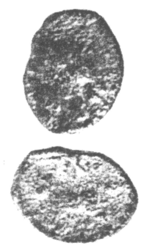 CCI-960076: An Iron Age Unit from SURREY Atrebates Celtic Coin Index reference:  96.0076