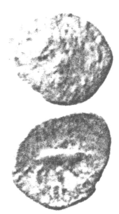 A resized image of An Iron Age Unit from SURREY of Eppillus Atrebates Celtic Coin Index reference:  96.0227