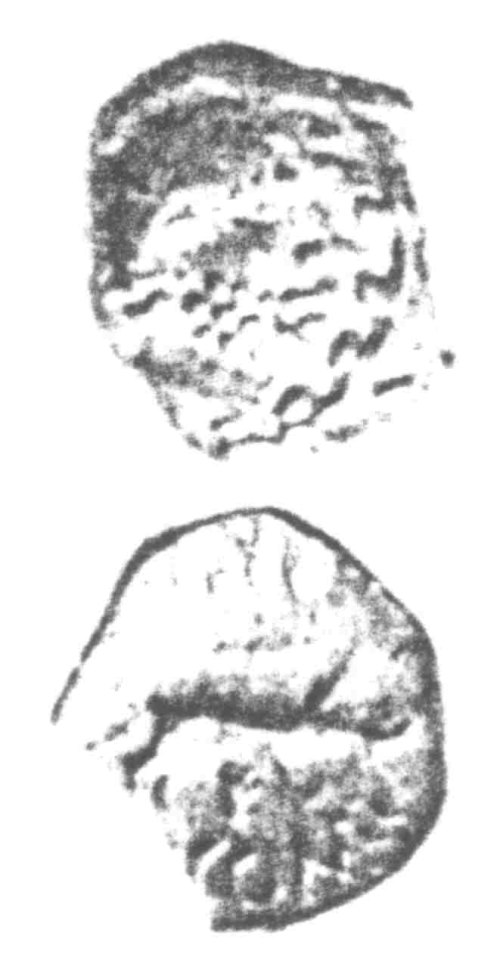 A resized image of An Iron Age Unit from SURREY of Eppillus Atrebates Celtic Coin Index reference:  96.023