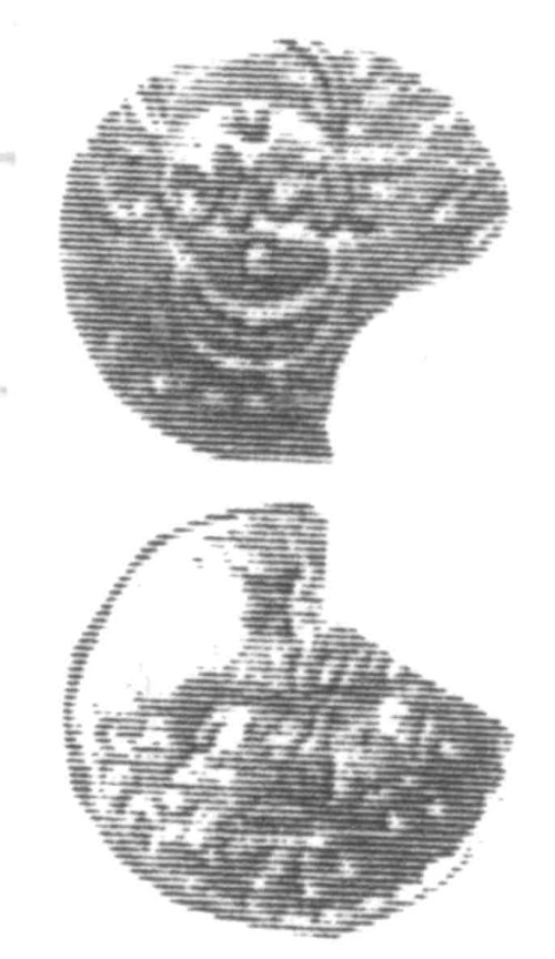 A resized image of An Iron Age Unit from SURREY of Verica Atrebates Celtic Coin Index reference:  96.0341