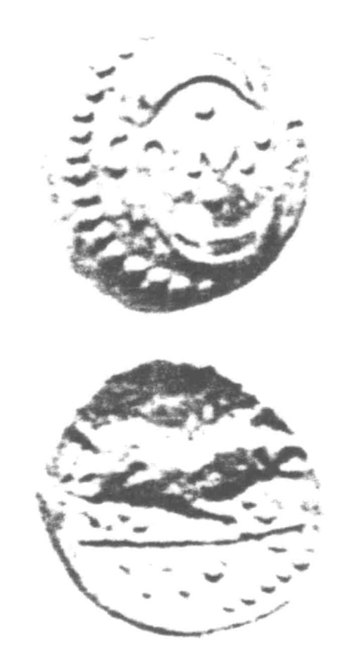 A resized image of An Iron Age Unit from SURREY of Verica Atrebates Celtic Coin Index reference:  96.0348