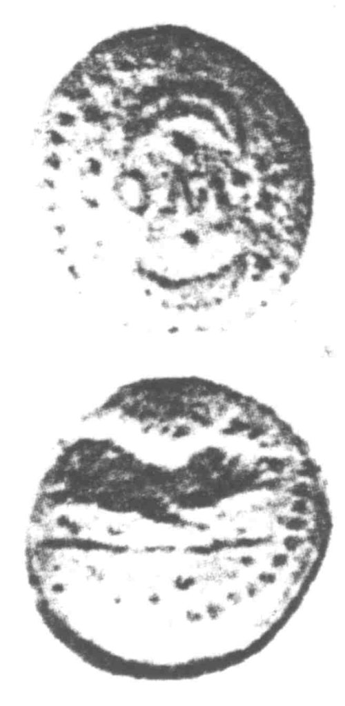 A resized image of An Iron Age Unit from SURREY of Verica Atrebates Celtic Coin Index reference:  96.0351