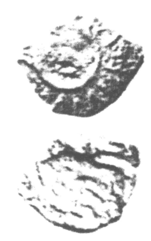 A resized image of An Iron Age Unit from SURREY of Verica Atrebates Celtic Coin Index reference:  96.0367