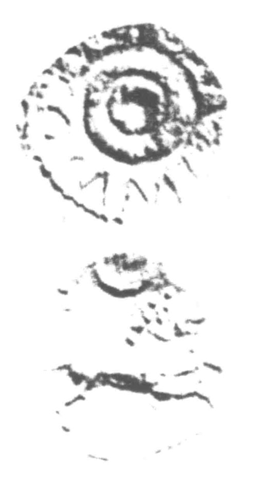 A resized image of An Iron Age Unit from SURREY of Verica Atrebates Celtic Coin Index reference:  96.0379