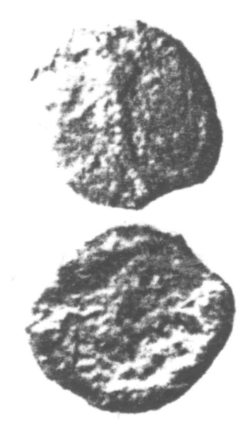A resized image of An Iron Age Unit from SURREY Atrebates Celtic Coin Index reference:  96.0448