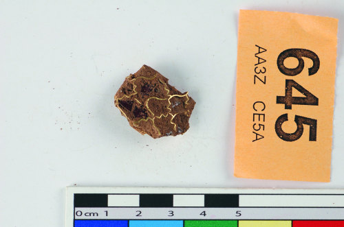 STAFFS-C090C3: A gold cloissone fragment