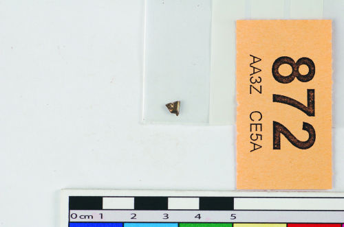 STAFFS-EA51B7: A fragment of silver pressblech foil from a helmet