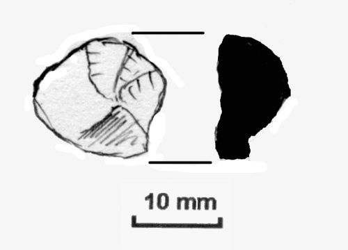 NLM-1185C8: Mesolithic to Neolithic Scraper