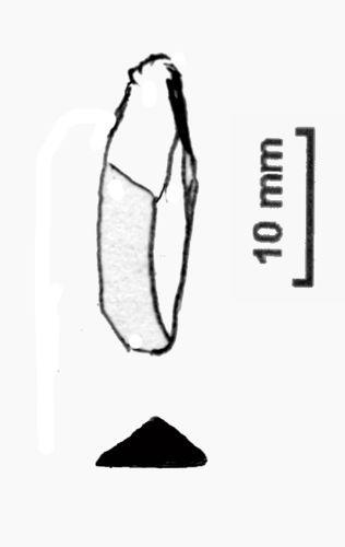 NLM-119275: Mesolithic microlith